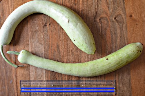 two long, slender bottle gourds on a wooden table next to a 12-inch ruler for perspective