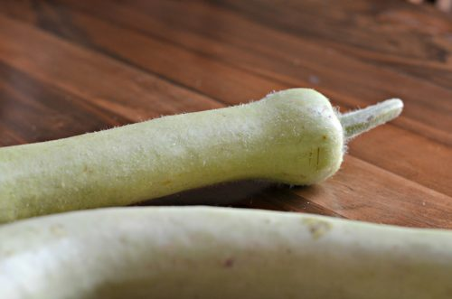 the neck and stem of a bottle gourd