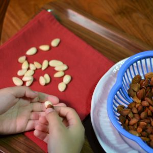Hands are shown as they pinch the skin off of hot blanched almonds. Peeled almonds can be seen on a red cloth napkin.